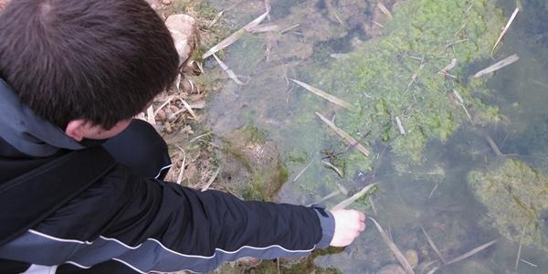 temperatura agua y algas 600x300