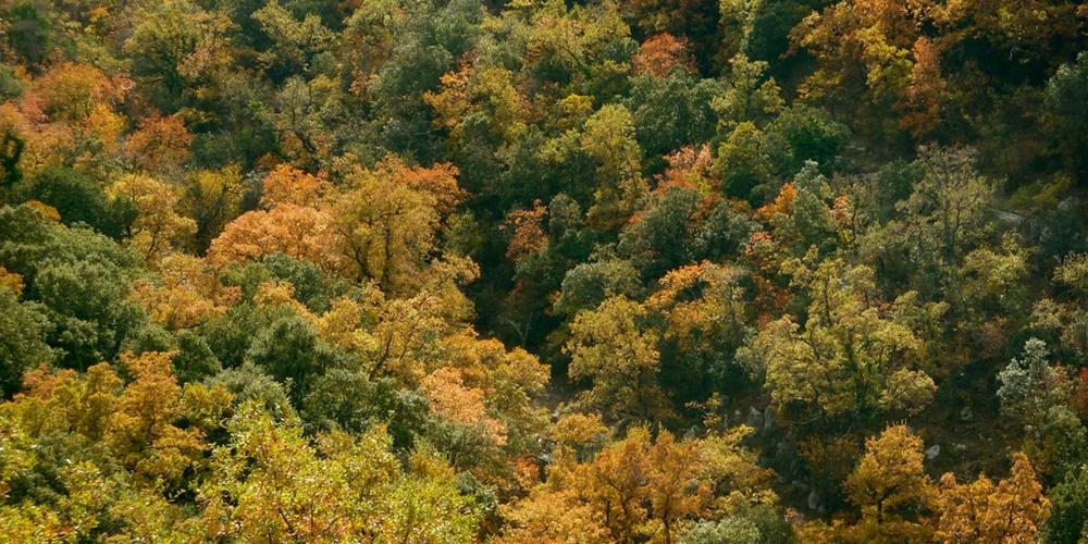 FICHA bosque 1000x500