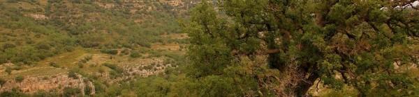 La magia del Barranc dels Horts y sus robles centenarios (2ª Parte)