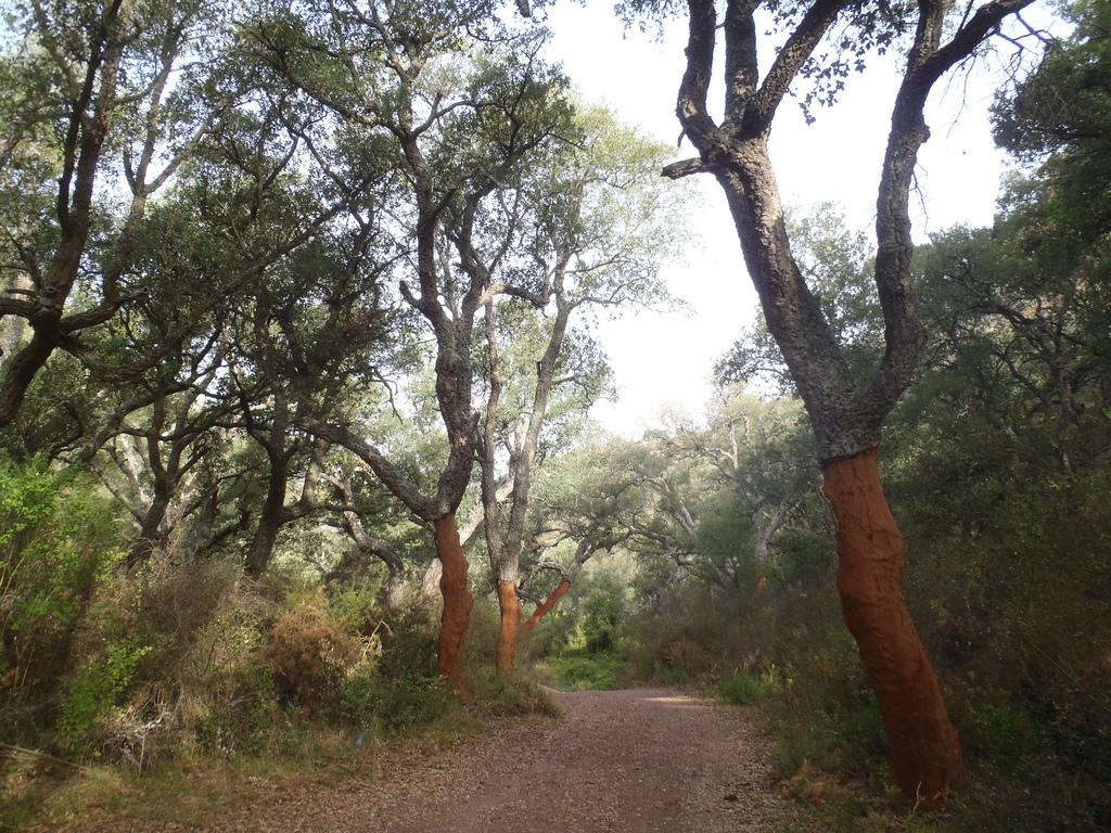 Bosque de Alcornoques. Autor, Bernardí