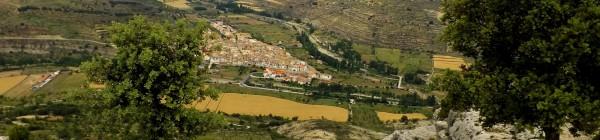 Naturalesa enigmàtica a Castelló. L'estrany món de l'orquídia niu d'ocell (1ª part)