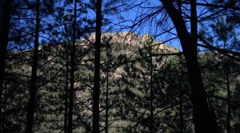 Naturalesa enigmàtica a Castelló. L'estrany món de l'orquídia niu d'ocell (2ª part)