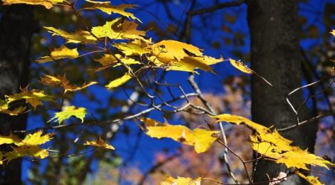 Bosques del Alto Mijares. El misterio de la otoñada (1ª Parte)