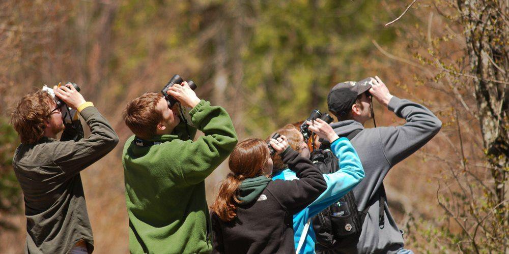 ficha 1000x500 birding barranc dels horts castellon ornitologia naturaleza turismo cultural ruta