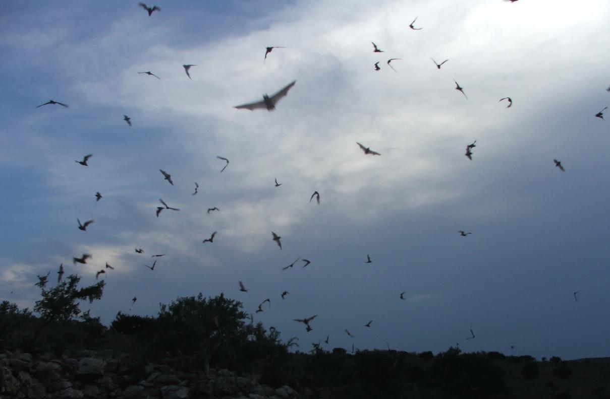3. Murciélagos volando en grupo. Autor, Dizfunkshinal