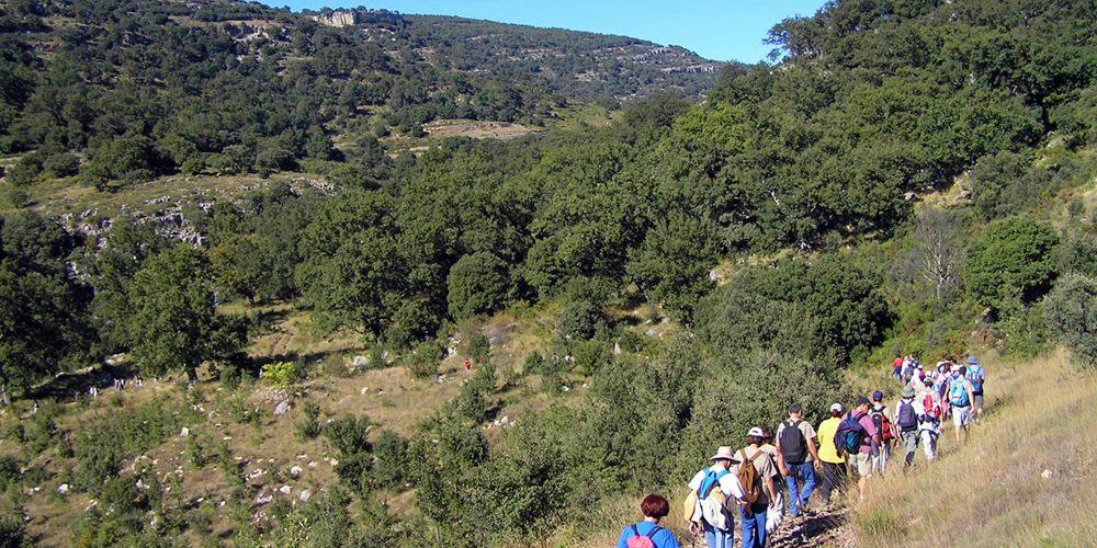 ficha 1000x500 sembrando Roure Gros Barranc dels Horts Naturaleza Castellón