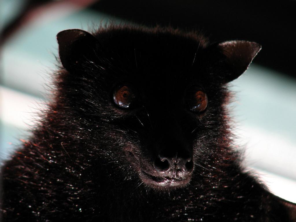 Oso o murciélago. Autor, Gustavo Fernando Durán
