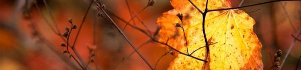 12 cosas que no sabías sobre los murciélagos