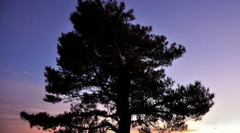 31 de enero, Día del Árbol en la Comunidad Valenciana