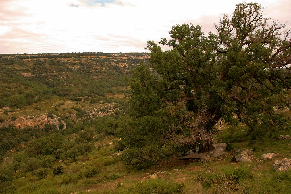 El Barranc dels Horts y su Roure Gros Castellón en Ruta turismo naturaleza familiar Comunidad Valenciana