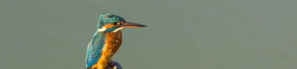 Jornadas de iniciación a la Ornitología
