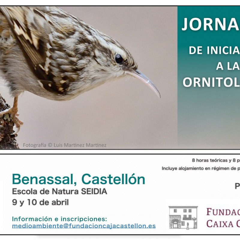Jornadas de iniciaci n a la ornitolog a for Cursos de cocina en castellon