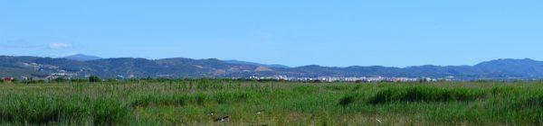 Parque Natural del Prat de Cabanes-Torreblanca