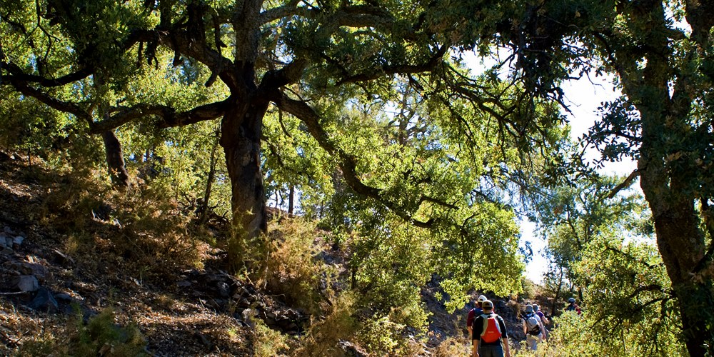 ficha-1000x500-almedijar-ruta-naturaleza-castellon-turismo-inmersion-cultural-ecoturismo-comunidad-valenciana