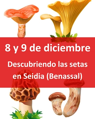 anuncio-setas-Seidia