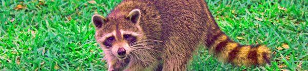 Stop a las especies exóticas invasoras