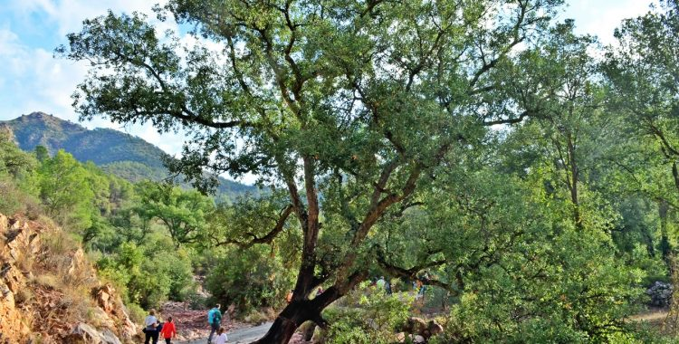 Los 20 Parajes Naturales Municipales de nuestras comarcas (2ª parte) / Els 20 Paratges Naturals Municipals de les nostres comarques (2ª part)