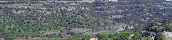 Ruta por el bosque monumental del Barranc dels Horts, y taller de plantas y animales del entorno en el Mas del Barranc (Ares del Maestrat)