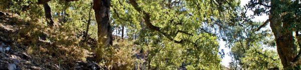 Fundacio caixa castello bankia sierra espadan espada serra sostenible comunidad valenciana