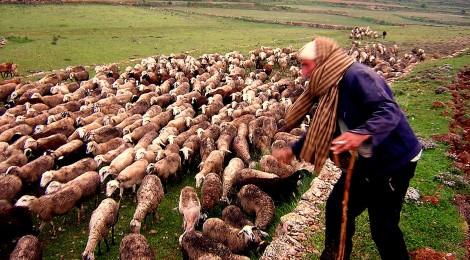 Caminos de trashumancia. Las migas de los pastores durante el invierno