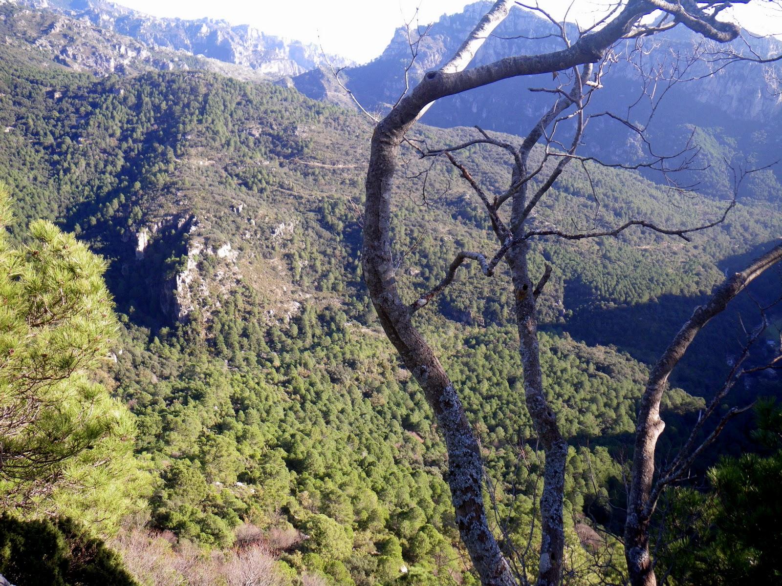 Bosque en Els Ports. Autor, Tolo Català
