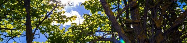 Nuestros bosques, nuestros árboles,….nuestra vida (2ª Parte)