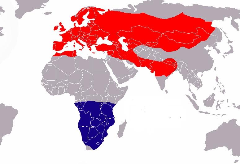 5. Área de distribución del vencejo común. En rojo, zona de cría. en azul, área de invernada. Autor Jorisboschmans