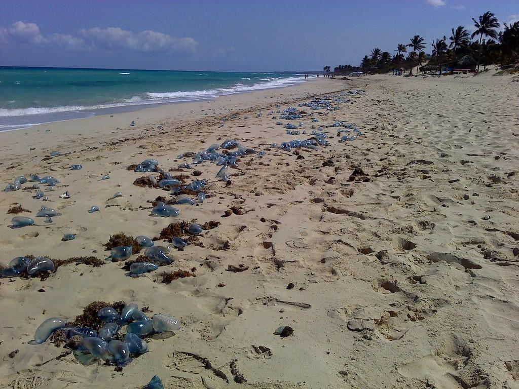 2. Playa atestada de medusas varadas. Autor, Mehmet Yayla