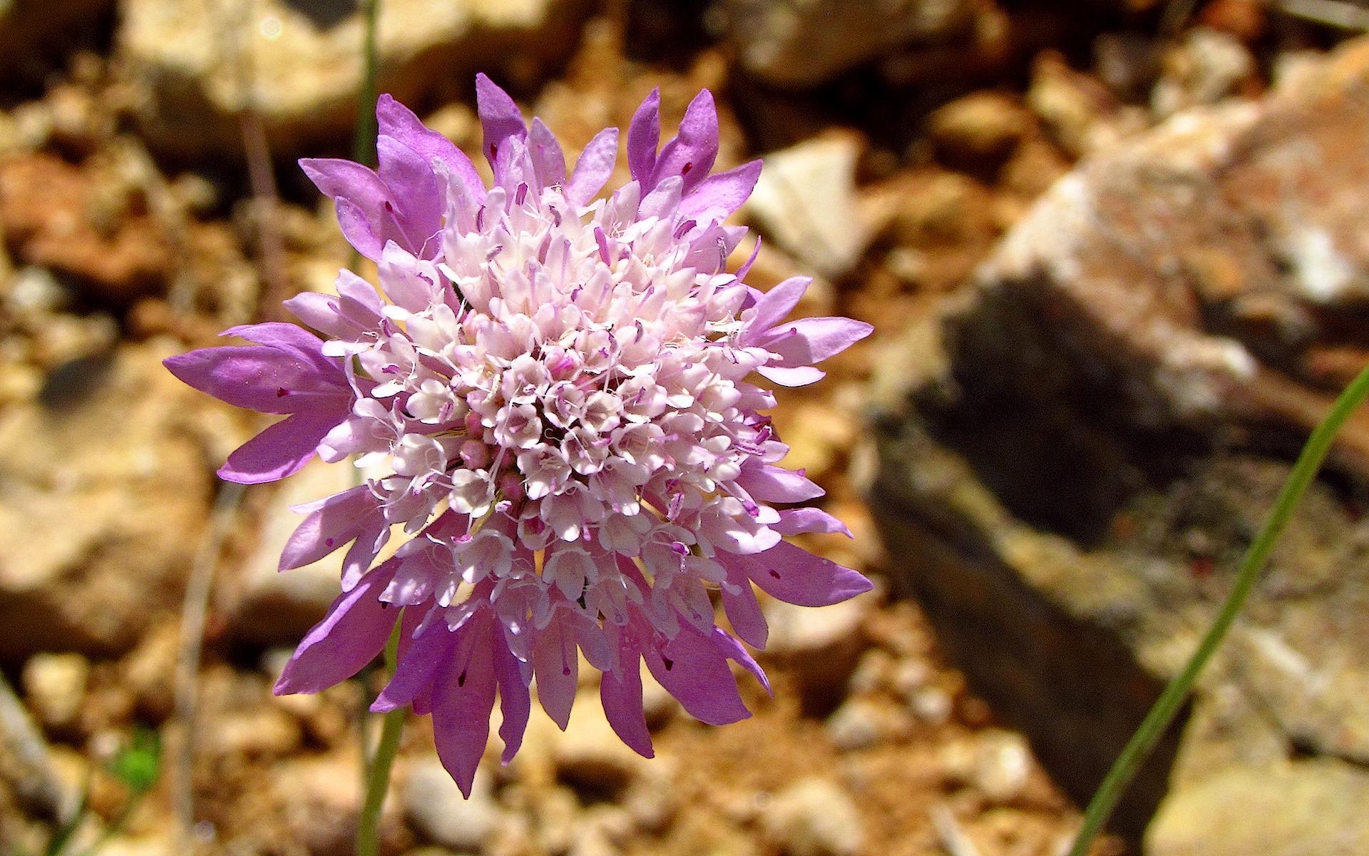 Flor en l'abeller. Autor, Jose Francisco Gasque Gas