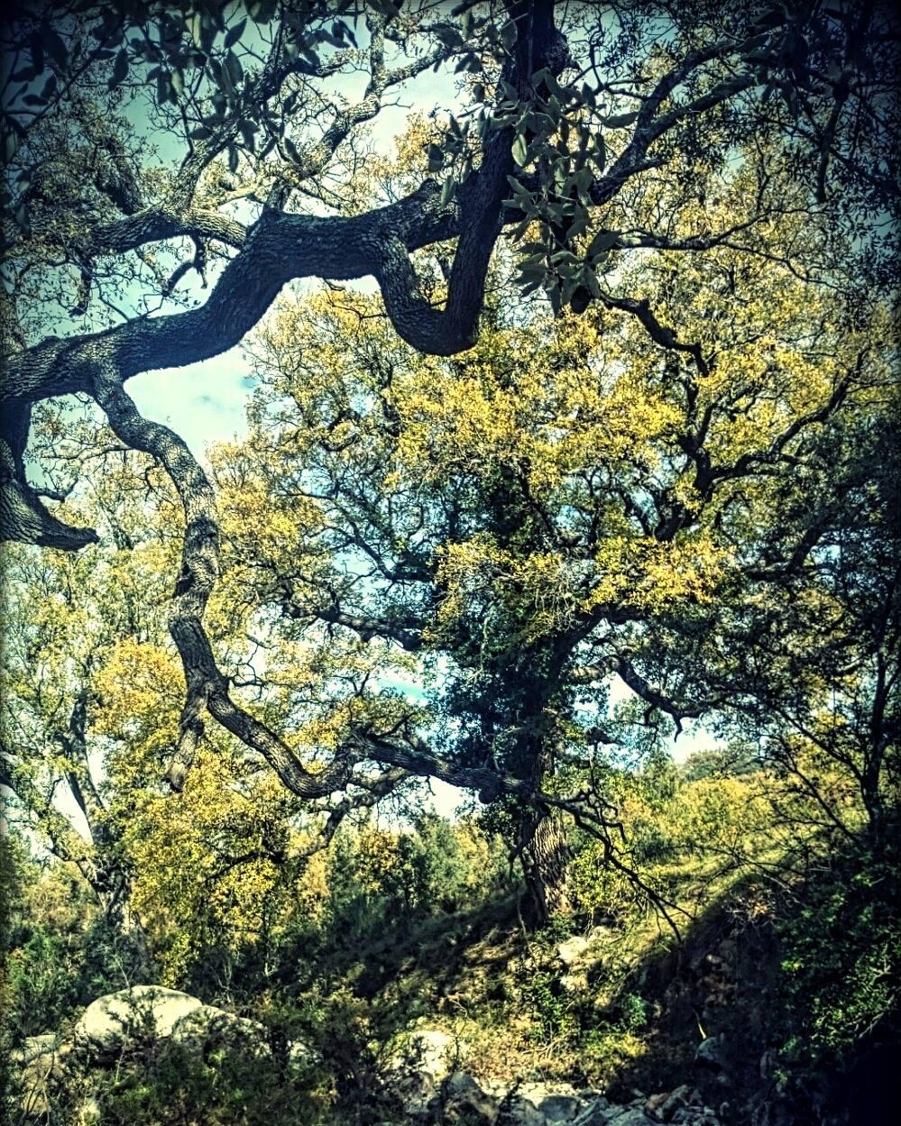 El bosque del Barranc dels Horts. Autor, Toni Ávila