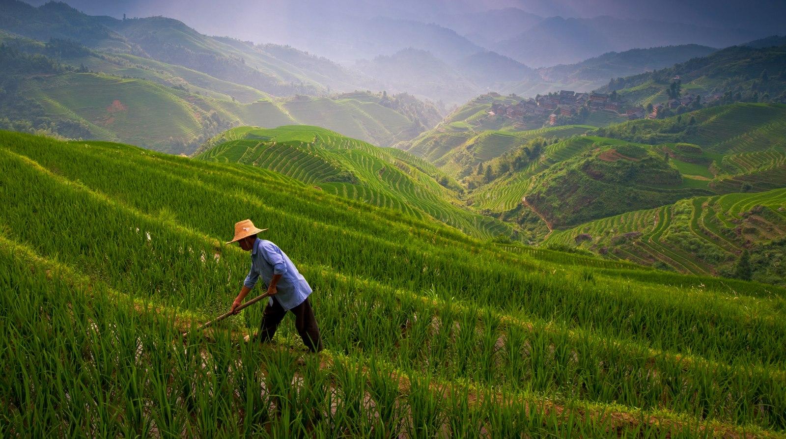 Terrazas de arroz en Guilin, China. Autor, Jesse E