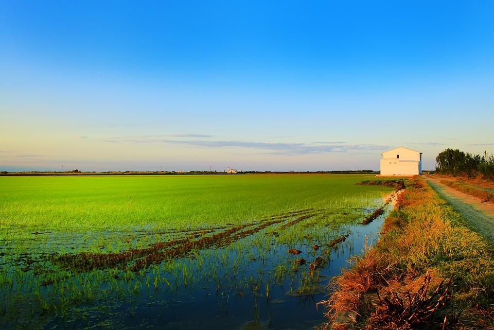 arrozales-autor-david-juan