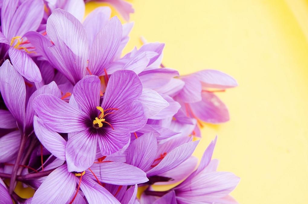 flor-de-azafran-autora-soledad-garcia-salas