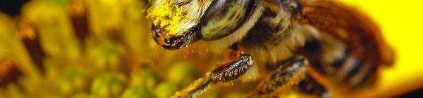 abeja apicultura Castellón naturaleza