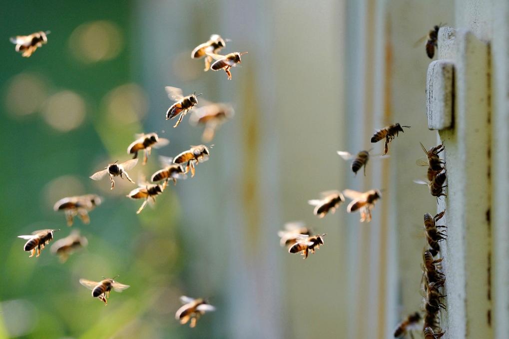 abejas apicultura panal miel jalea