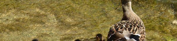 Aguas del Alto Mijares: Cortes de Arenoso