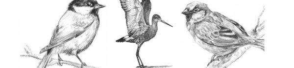 anillamiento aves castellon